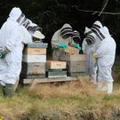 Mary Montaut and other beekeepers examining a hive