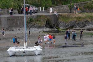The Sowerby beaked whale in Wicklow Harbour beside a catamaran