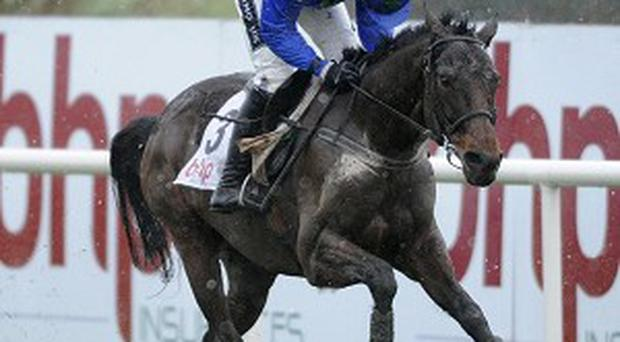 Ruby Walsh will be riding Hurricane Fly in the big race, the Champion Hurdle, tomorrow at Cheltenham