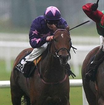 Irish Bookmakers Association wants a closer a relationship with racing industry