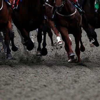 A committee in the Dáil is currently looking into Ireland's horse industry, inviting various stakeholders and interested parties to try and build a full picture of how it is performing at the moment