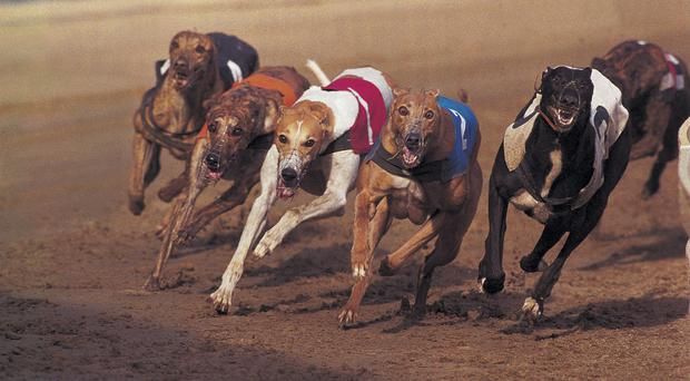 The Irish Greyhound Board has published its five year strategic plan