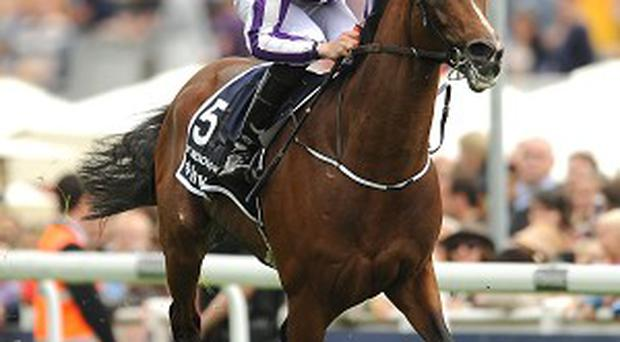 St Nicholas Abbey has picked up a career-ending injury