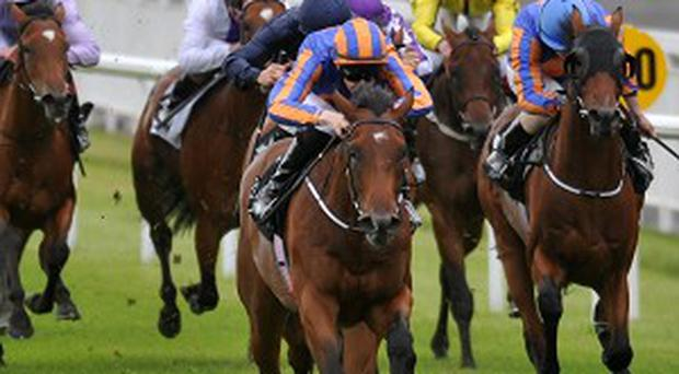 Great White Eagle shows the way home at the Curragh