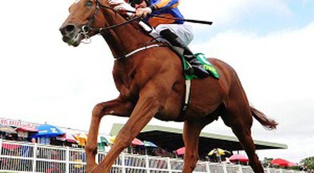 Eye Of The Storm adds a touch of class to proceedings at Listowel