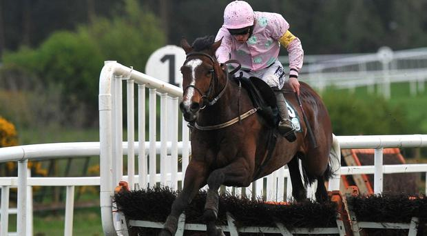 Mikael D'Haguenet will face Mourad in the Thurles Racecourse Hurdle