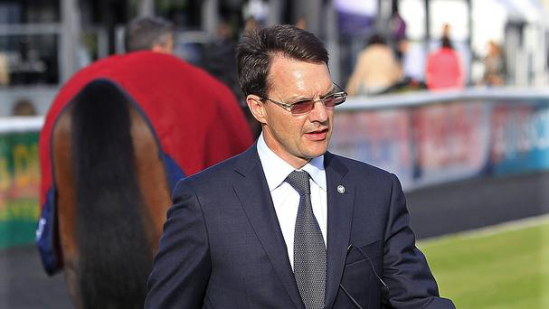 Century and Kingfisher will represent Aidan O'Brien in the Dee Stakes
