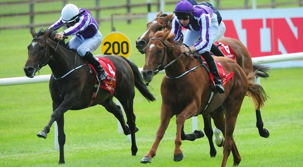 Australia eases past Kingfisher (rail) on his way to victory