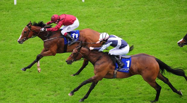 Purr Along wins at the Curragh