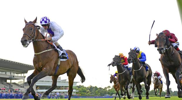 Chance To Dance wins at Leopardstown