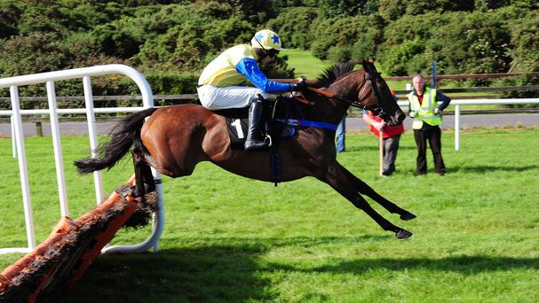 Little King Robin wins at Bellewstown