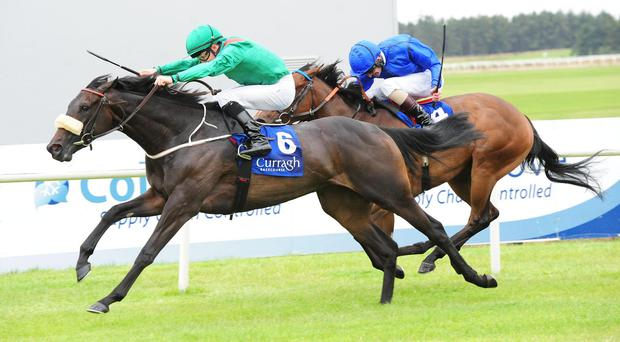 Some of Mr Jamgotchian's mares had been bred with a raft of stallions from Coolmore