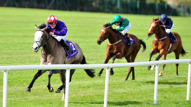 Success Days has the race in the bag under Shane Foley
