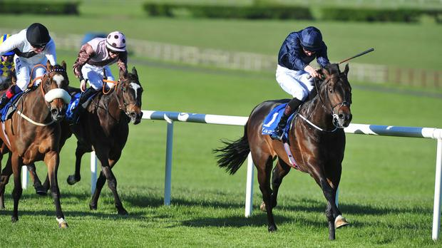 The Happy Prince isn't for catching at Naas