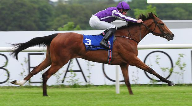 Minding wins at Leopardstown