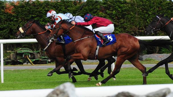 Henshaw (maroon) comes to win his maiden
