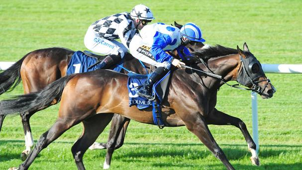 Play The Game (far side) just loses out to Waipu Cove at Tipperary