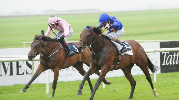 Herald The Dawn (blue) gets up to win at the Curragh