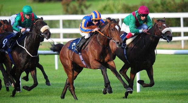 Legatissimo (blue and orange silks) quickens away to win the Matron Stakes