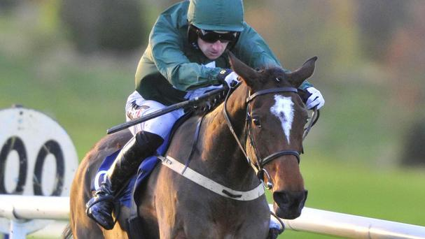 Augusta Kate stays unbeaten at Navan