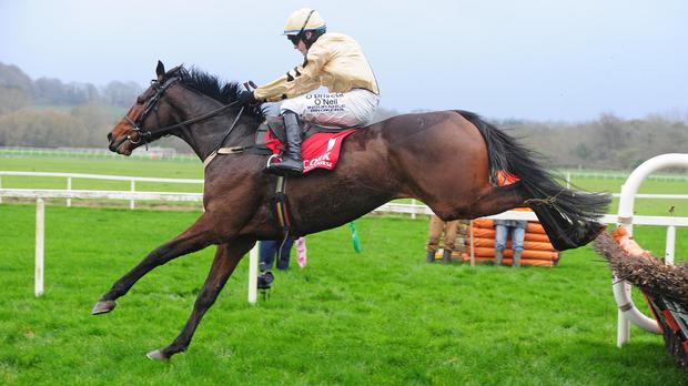 Patrick Mullins says Bellshill, pictured, is a Grade One winner thinks he will be a class apart in the novices' hurdle (Photo: PA)