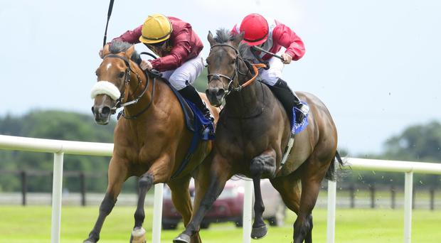 Queen Catrine (left) holds off Most Beautiful to win at Fairyhouse