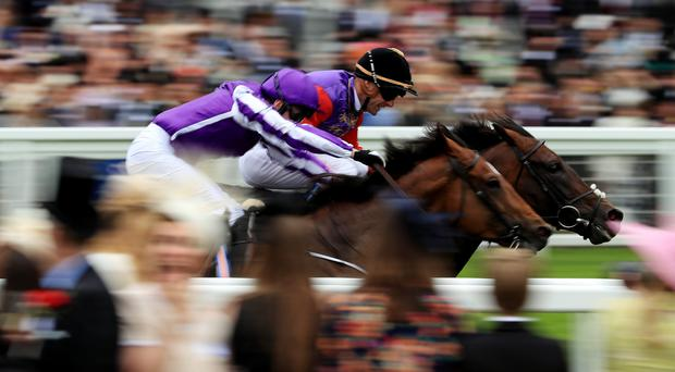 Highland Reel is pipped by Dartmouth at Royal Ascot