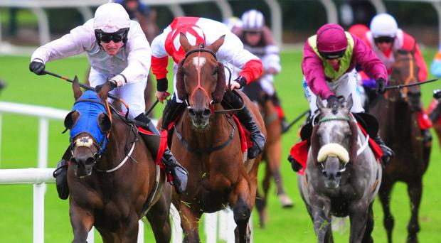 Swamp Fox (left) goes for home at Galway