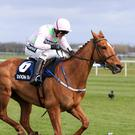 Annie Power won't run in Punchestown this week