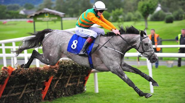 Grey Waters wins at Killarney
