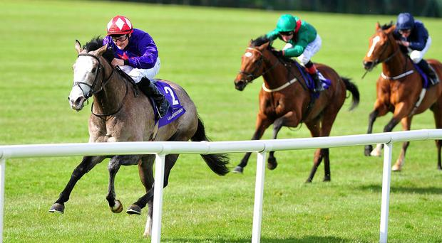 Success Days is likely to line up for the Qipco Irish Champion Stakes, as long as the ground is suitable. Photo: PA