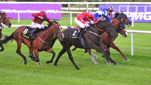Suedois (red) lands the Boomerang Stakes