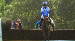 Tranquil Magic takes well to fences