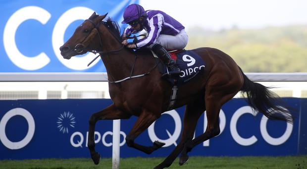 Hydrangea registers a landmark win for Aidan O'Brien