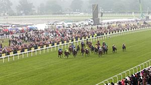 Fancy Blue was a 13-2 shot to provide the fledgling handler with a first Classic success in the French Oaks, having filled the runner-up spot behind O'Brien senior's Peaceful in the Irish 1,000 Guineas three weeks ago (stock photo)