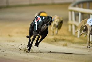 Laughil Blake on the way to winning the boylesports.com Irish Greyhound Derby 2014