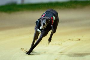 The Irish Greyhound Board and the Dublin GOBA issued statements in which they confirmed their participation in mediation talks under the auspices of Kieran Mulvey (stock pic)