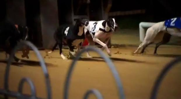 For greyhound racing in Cork, the Laurels is the biggest event of the year