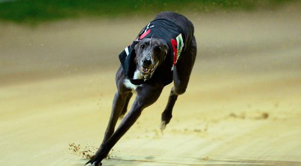 Owen McKenna is hopeful that Farloe Blitz (9.42) will go up straight from his unfavourable trap-six draw and put his brilliant early pace to best effect in Heat 5 (Stock image)