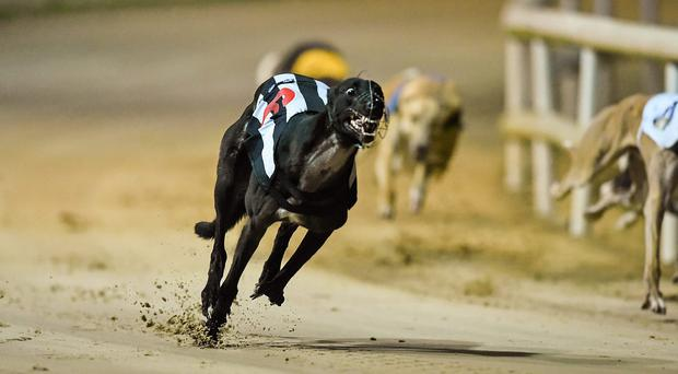 There is an intriguing clash in prospect at Shelbourne Park, where Liam Dowling's Derby finalist Vulturi will be challenged by Brendan Matthews' Kirby Memorial winner Cable Bay (Stock image)