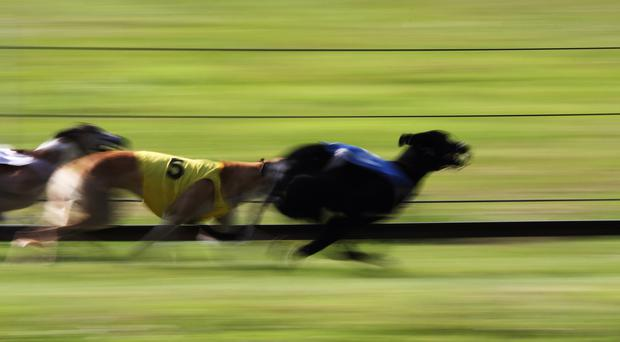 Clares Rocket broke the 28-second barrier for the third successive week Stock photo: Martial Colomb