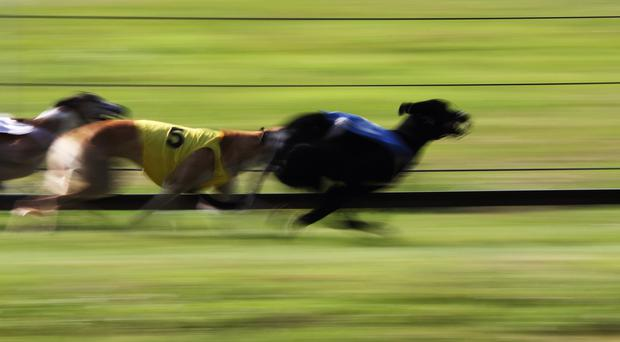 As anticipated, the opening round of the Texacloth Juvenile Derby at Newbridge last week featured a few classy performances and the big two to emerge were Joe The Pro and Bull Run Bolt