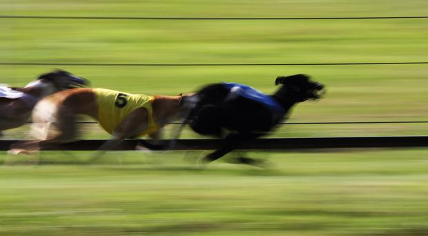 The defeat of Clares Rocket in the Boylesports 550 was the biggest shock. (Stock Photo)