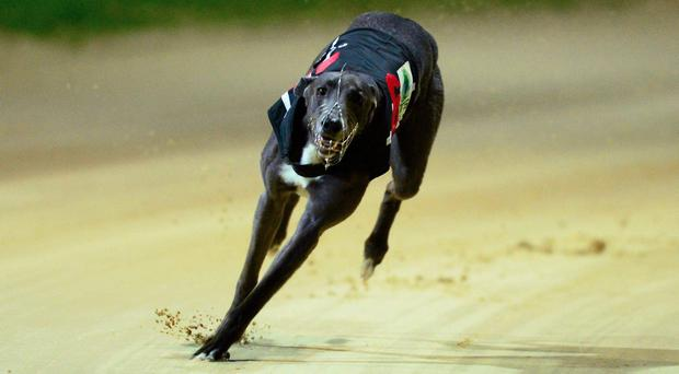 Curraheen Park provides the main Irish action on the track this evening and the excellent card features the semi-finals of the €10,000 Riverside Oscar Open 525. Stock photo