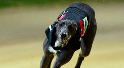 The Johnny O'Sullivan- trained son of Droopys Cain, who went off the 6/4 favourite, was only fifth to the opening bend as Summerfield Sky set the pace. (stock photo)