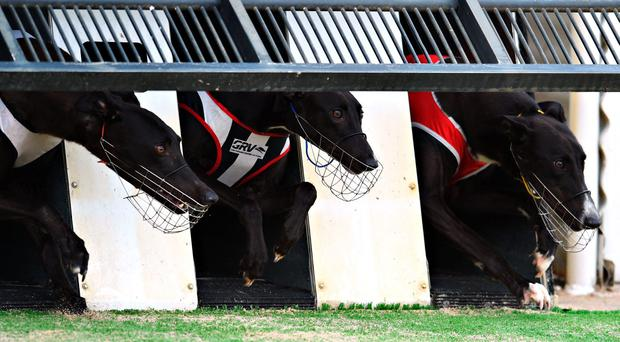 Good News ran a blinder when coming late to beat the early-paced Colarhouse Gerry in Tuesday's semi-final and he will have to overcome the same rival this time (stock photo)