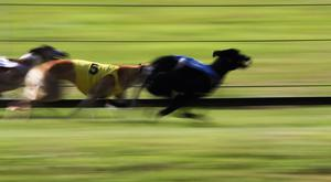 Droopys Davy was just one spot slower as he flew clear from traps and won by six lengths from Chespirito in 28.29. Stock photo