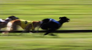 'Last year's Derby-winning trainer Pat Guilfoyle has two of his three runners in opposition in Heat 14' (stock photo)