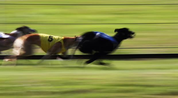 'Herecomesdahoney took a flying start in the second semi but Ballymac Tas displayed courage and impressive pace' (stock photo)