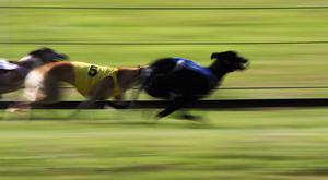 Cornerhouse Lady produced the performance of her career to win the Lee Strand 550 at Tralee on Saturday. (stock photo)